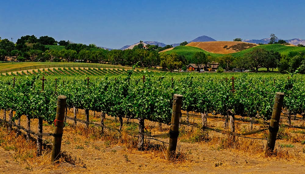 WA wine vineyards